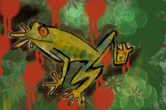 Frog on the doorstep